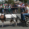 Pony express. The Running of the Sheep, Boorowa, 5 October 2008.