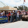 Finally! But why aren't they running? The Running of the Sheep, Boorowa, 5 October 2008.