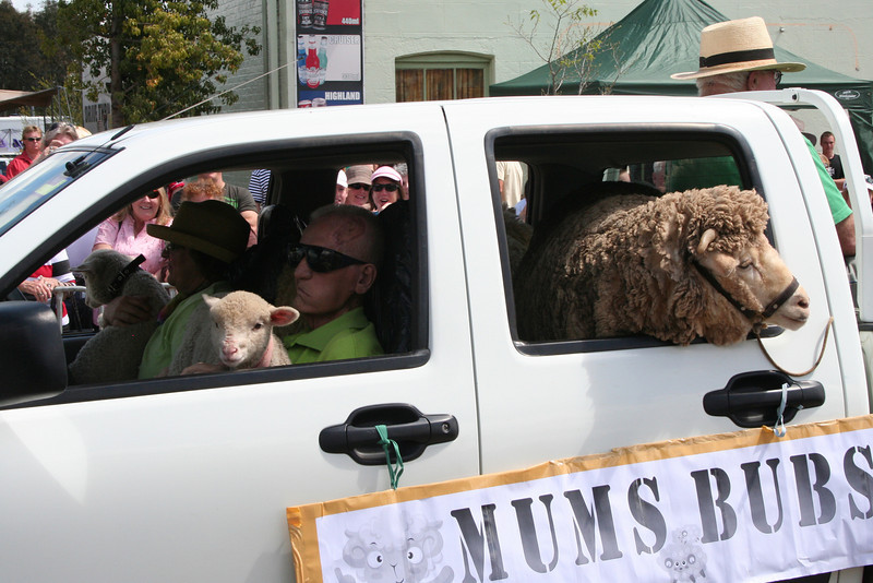 awww... how cuuuute! The Running of the Sheep, Boorowa, 5 October 2008.