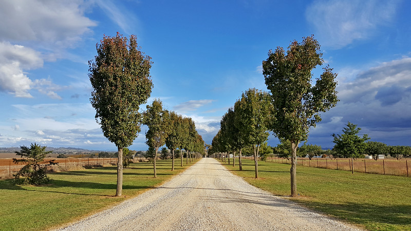 6 May 2017: Avenue of trees near Gulgong, New South Wales.