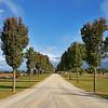 6 May 2017: Avenue of trees near Gulgong, New South Wales.