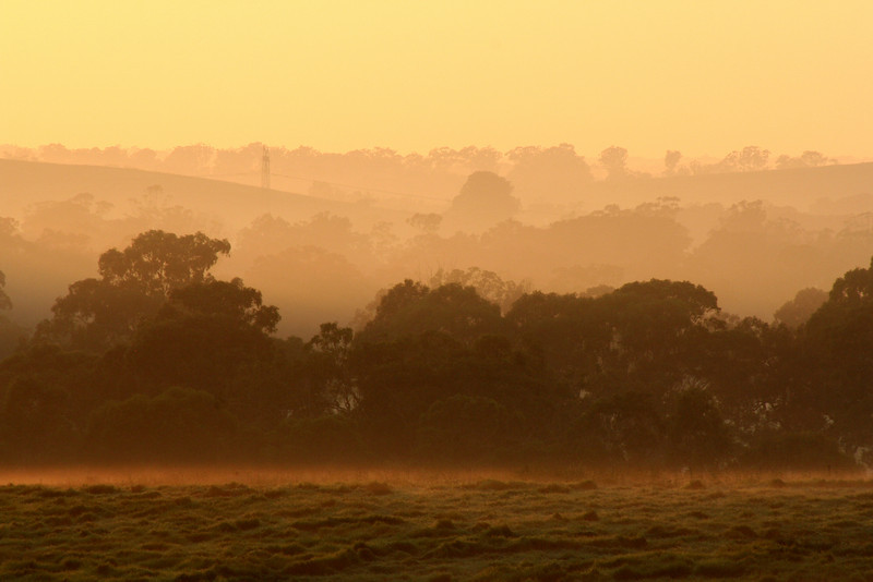 Misty landscape bathed in morning light, along the Hume Highway south of Campbelltown, March 2008.