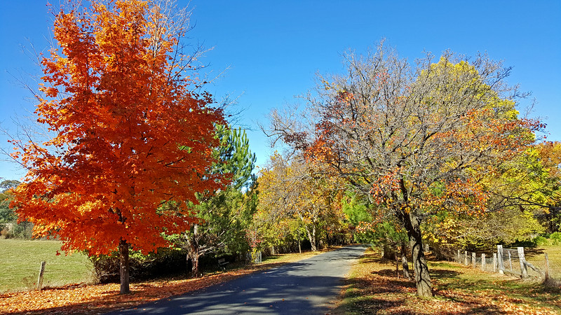 7 May 2017: Autumn streetscape at Hill End, New South Wales.