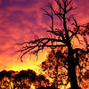 Red sky at morning, sailor's warning. A magnificent false dawn lights up the eastern sky at Reids Flat, New South Wales.