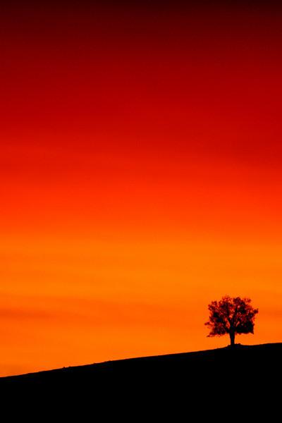 Ridgeline near Reids Flat at sunset.