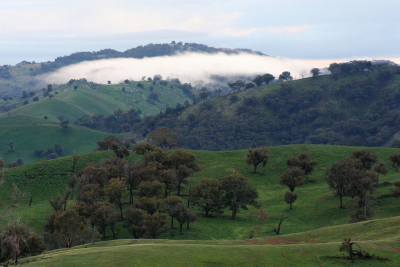 Mist-cloaked hillside at Reids Flat, New South Wales.