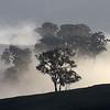 27 July 2019: midwinter morning, Reids Flat, New South Wales.
