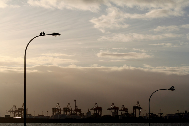 Matching birds on matching poles. Botany Container Terminal, as seen from La Perouse.