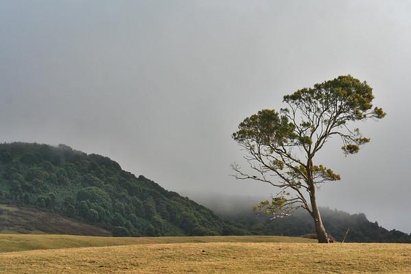 29 July 2015: Fog on the hills above Pyengana, Tasmania.