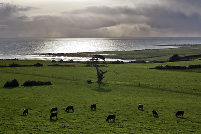 1 August 2015: Green fields and storms on Bass Strait, as seen from the headland west of Stanley, Tasmania.