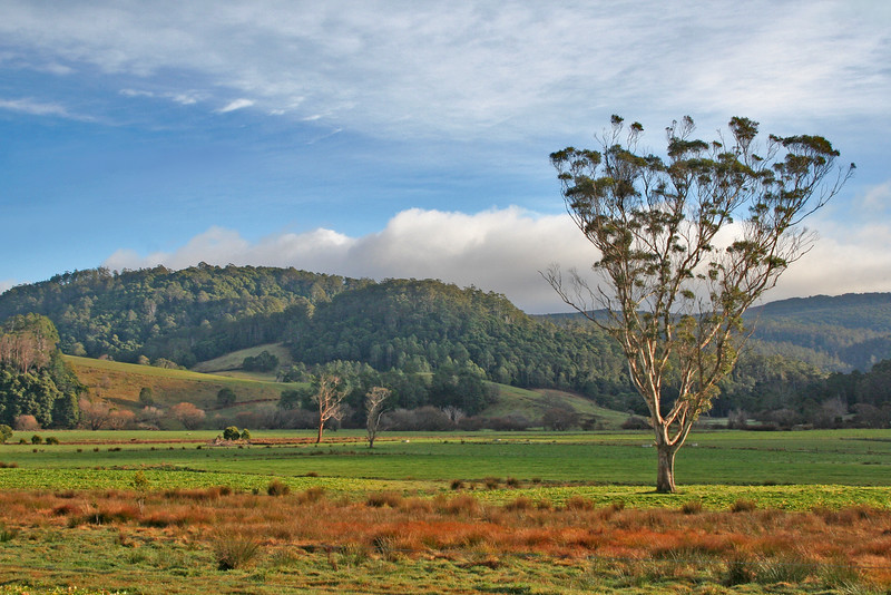 29 July 2015: Landscape at Pyengana, Tasmania.