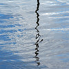 8 April 2017: Sarah Island, Macquarie Harbour, Tasmania reflection 3.
