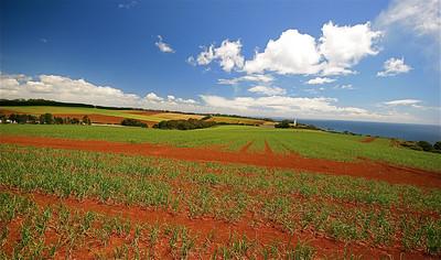 Van Diemen's Tulip Farm & Lighthouse, Wynyard, Tasmanië, Australië.