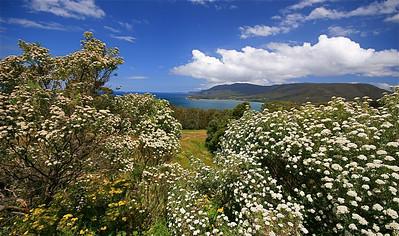Pirates Bay, Tasman Peninsula, Tasmanië, Australië.