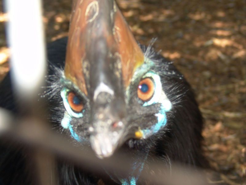 Curious and deadly <br /> Featherdale Wildlife Park