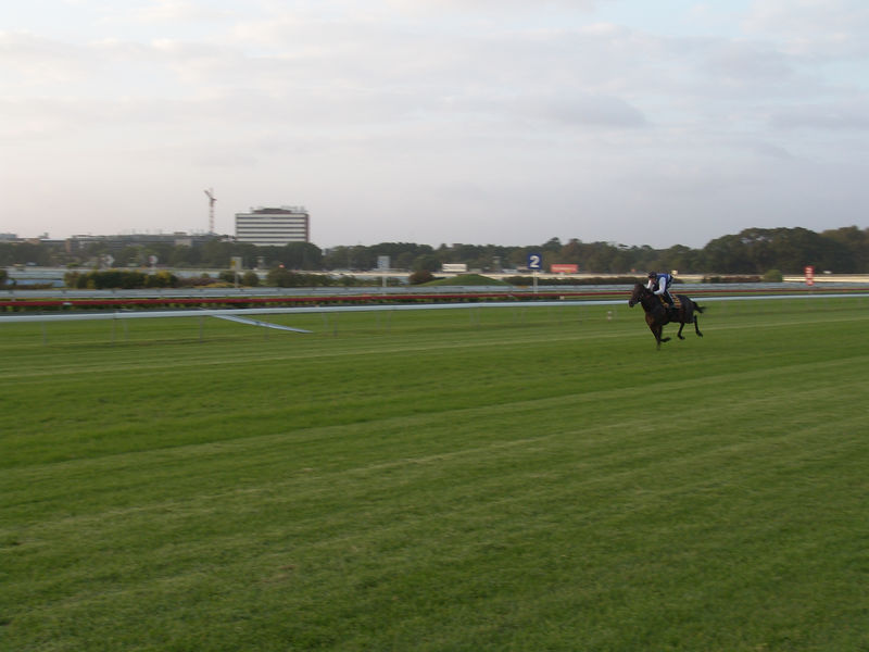 My conference was held at the Royal Randwick Racetrack during the week when there was no racing but the horses still trained every morning