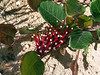 Unidentified plant<br /> If you know what they are email me....
