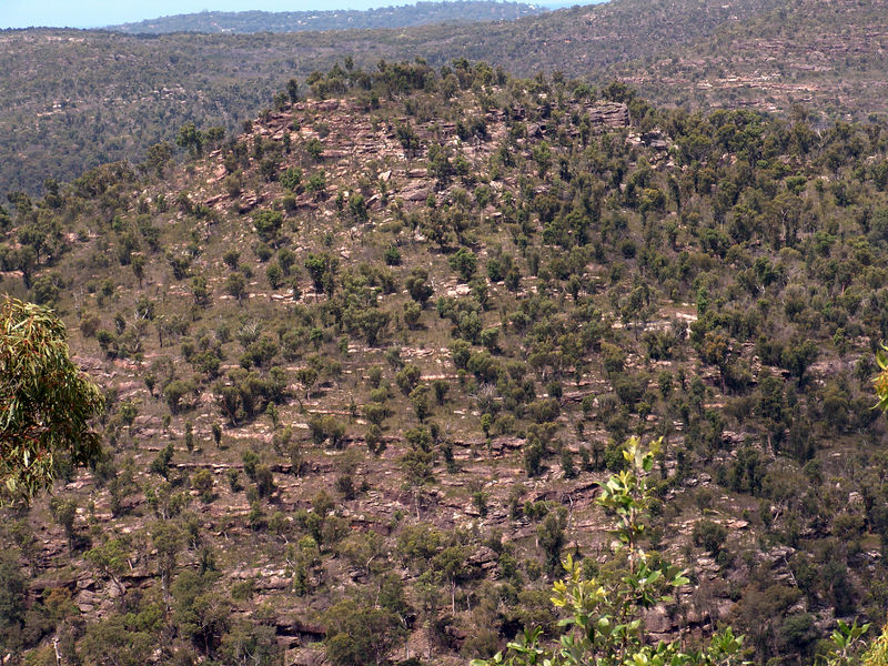 Looking down on Death Adder Country.  Typical habitat for those cool snakes. <br /> Ku-Ring-Gai-Chase NP