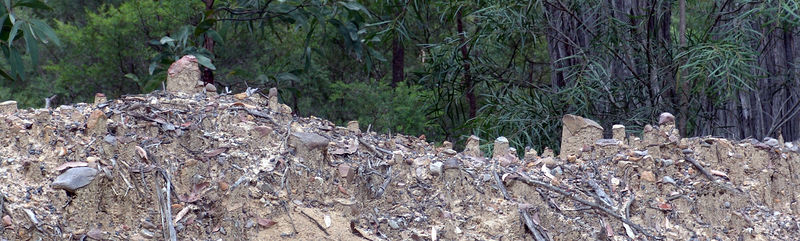 Unique erosin pattern, Five Mile Creek Road, Megalong Valley. Note the little piles of sand supporting a rock.  The rocks protected the underlying soil from being washed away dirung a rain storm.