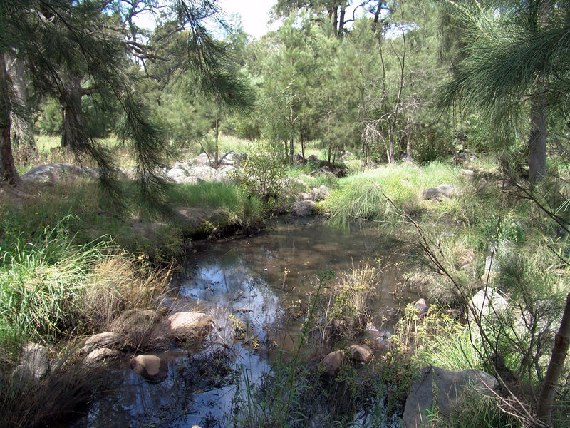Marshy area adjacient to the river where I caught the Red Belly Black Snake, Cox River