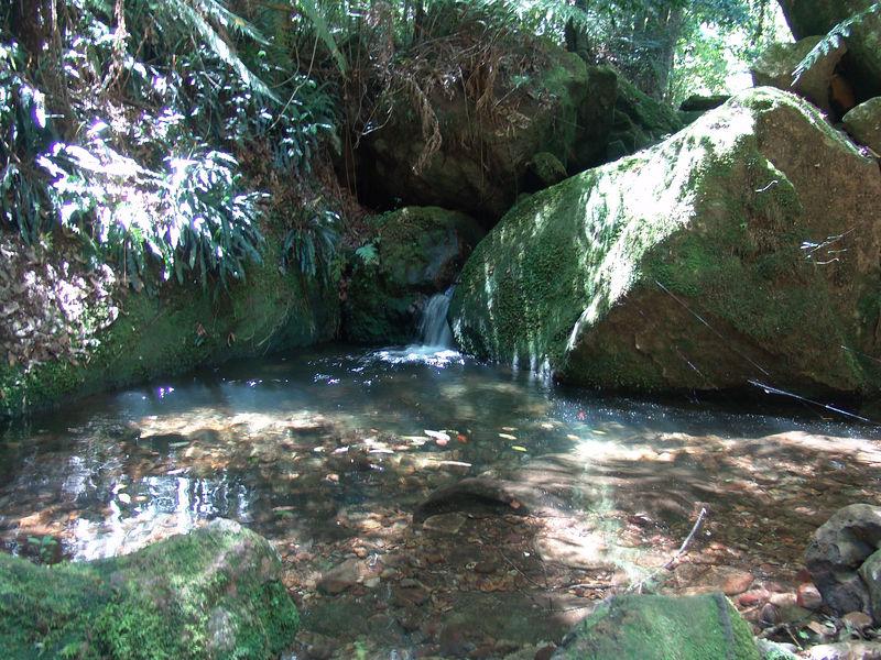 Stream inside the rainforest