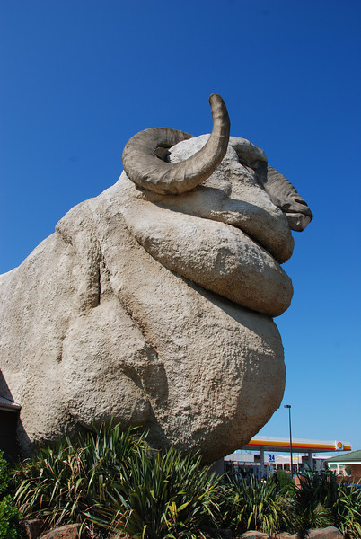 """The Giant Merino. Taken as part of our """"tacky tourist destination"""" series. But ended up being good due to excellent bakery and nice man promoting his range of gourmet sauces who recommended Yass market to us."""