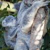 Australia Zoo (11) by Ronald Bradford - Admiiring Creation
