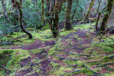 Mossy forest floor