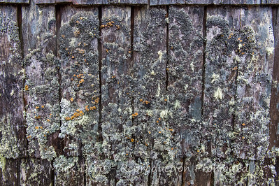 Moss on the boat shed, Dove Lake