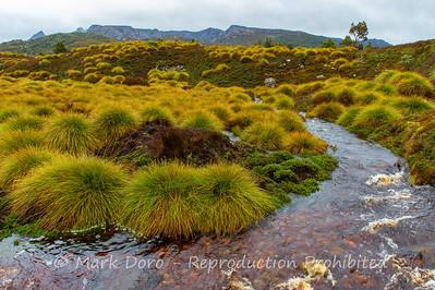 Ronni Creek