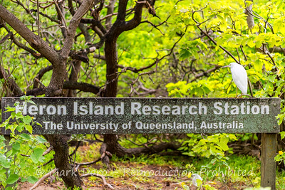 Entry to the research station, with obligatory Egret, Heron Island, Queensland