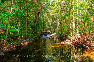 Creek below Florence Falls, Litchfield, Northern Territory