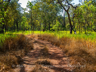 Bush track, Litchfield, Northern Territory