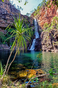 Pandanus Tree on the edge of Sandy Creek Falls, Litchfield, Northern Territory