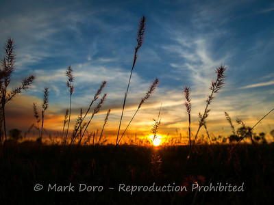 Sunset through the grasses, Mary River, Northern Territory