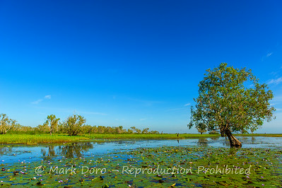 Mary River flood plain at the start of the dry season, Mary River, Northern Territory