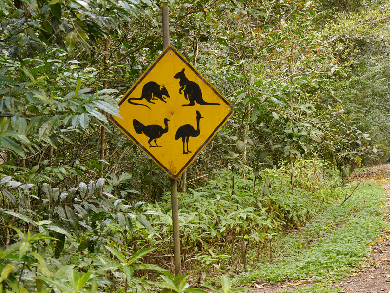 Our kind of road sign - watch out for marsupials and big birds.  The one on the lower right is a cassowary.  We saw lots of birds but no cassowaries.