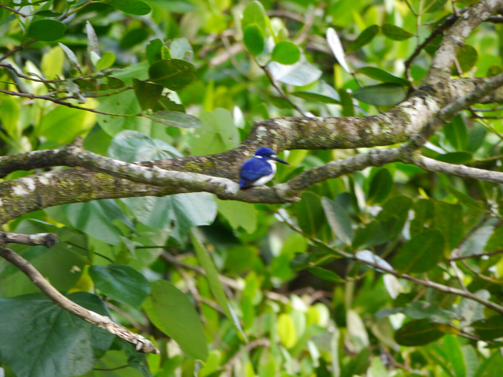 We also saw several brilliant blue little kingfishers but never got a good photo on the whole trip.