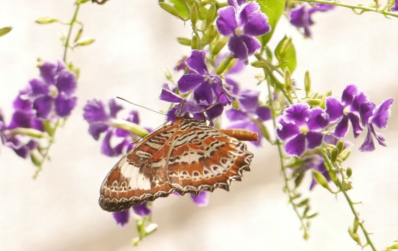 A closeup of the previous picture.  Cropping changed the balance of background light and darker butterfly and flowers.