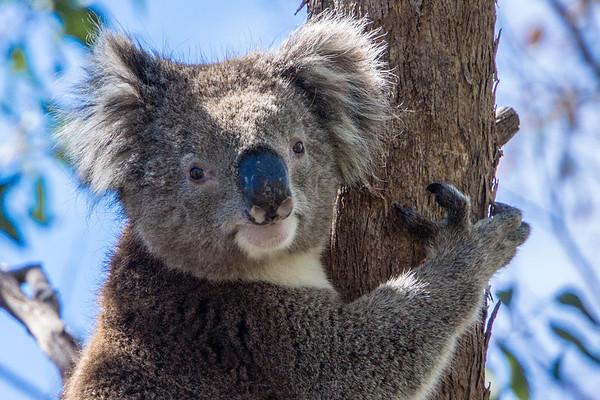 Adelaide - 2014