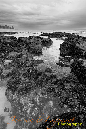 Kelp and Mussels greyscale