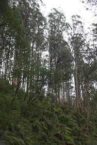 Yara Range