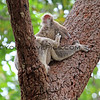 2016-03-05_4989_Noosa National Park_Koala.JPG