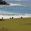 2016-03-14_0936_Moonee Beach Kangaroos.JPG