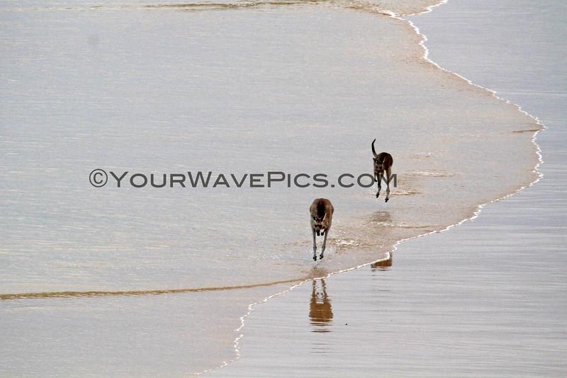 2016-03-14_7562_Moonee Beach Kangaroos.JPG<br /> <br /> Beach kangaroos!