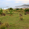 2016-03-23_1381_Pebbly Beach kangaroos.JPG<br /> <br /> These kangaroos come down onto the grass behind the beach every night just before sunset.