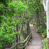 2016-03-05_0543_Noosa_Little Cove boardwalk.JPG