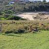 2016-03-12_0881_Moonee Beach Reserve Kangaroos.JPG
