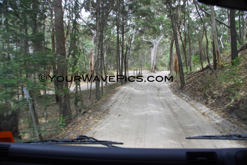 IMG_1068_FraserIslandRainforest