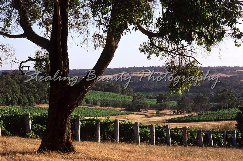 Margaret River Vineyards